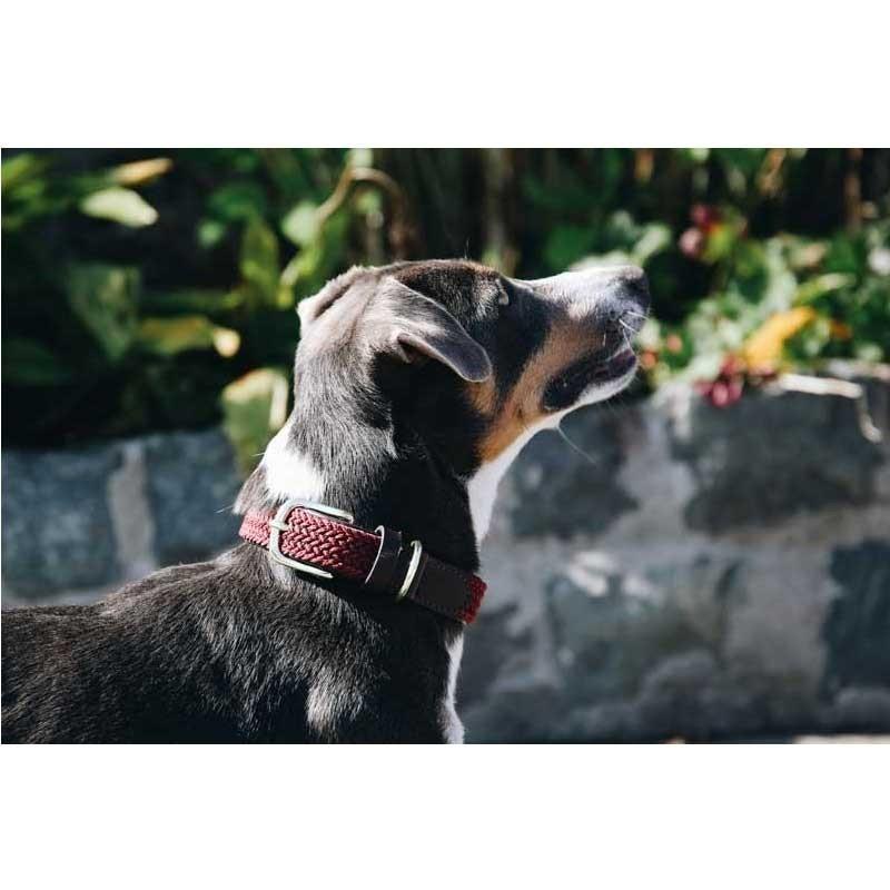 Collier nylon tressé chien Kentucky