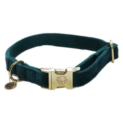Collier chien velour Velvet Kentucky