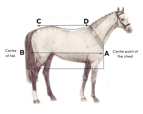Guide des tailles couverture Horseware